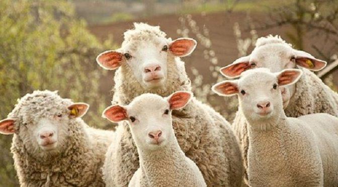 Ξυπνάτε πρόβατα!